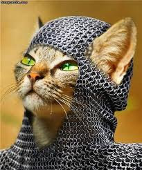 funny-stuff-knight-kitty